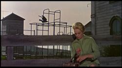 Sinyard_Birds_Frame1